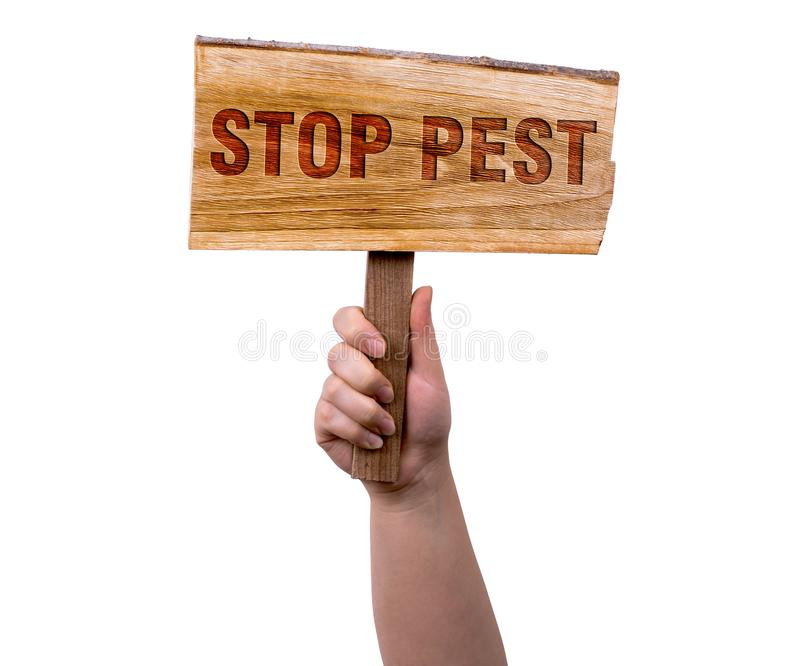 Stop pest wooden sign. A woman holding stop pest wooden sign isolated on white background stock photography