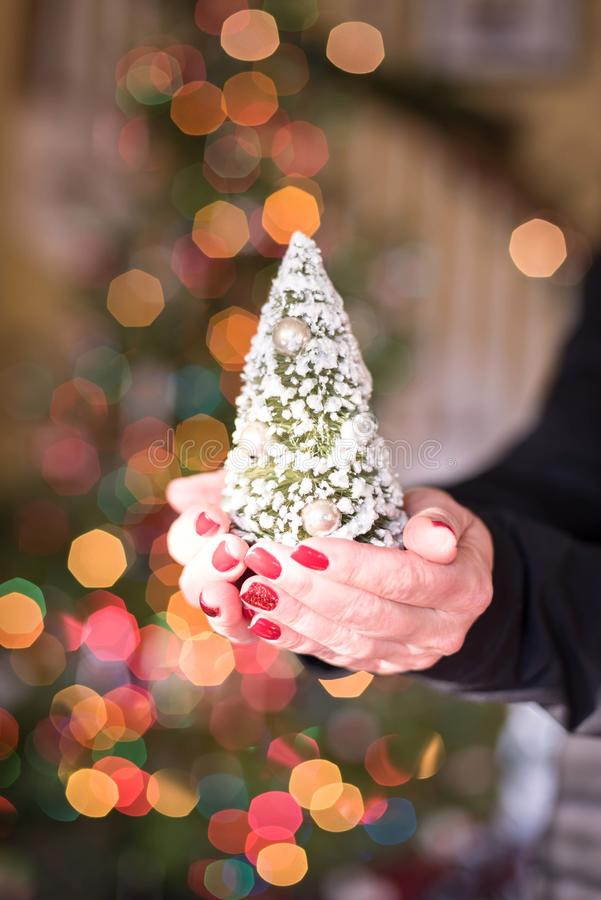 Woman holding a tiny Christmas tree in her hands stock photos