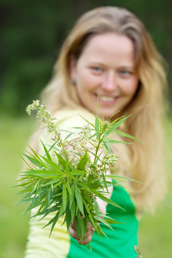 Woman holds cannabis stock images