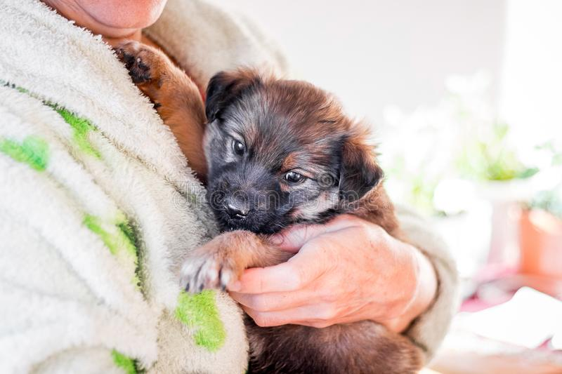 A woman holds on the hands of a sick dog_ royalty free stock photo