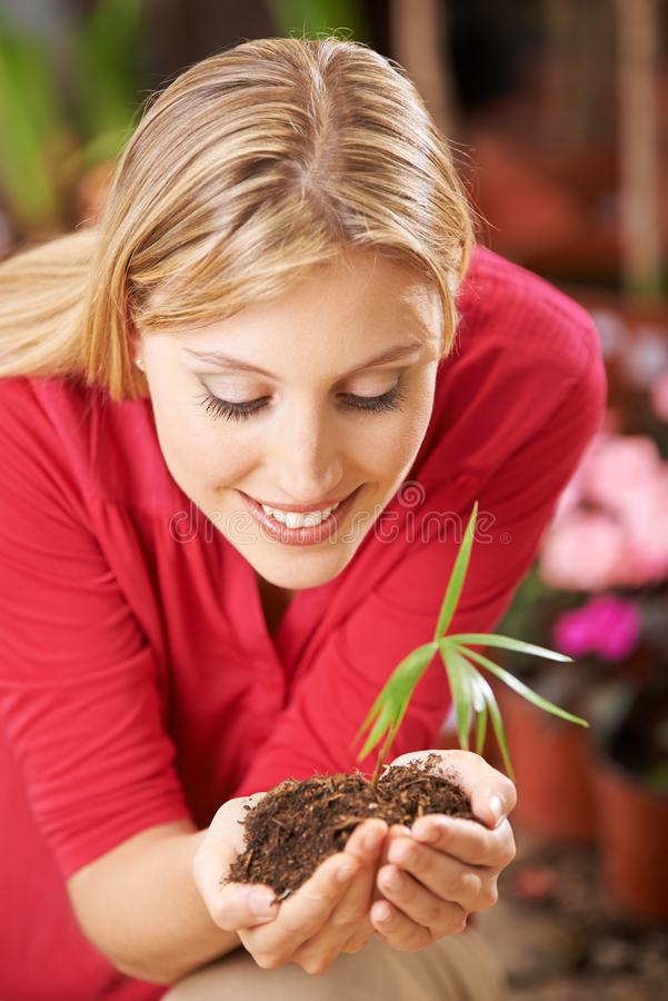 Woman holds small plant in the hands royalty free stock image
