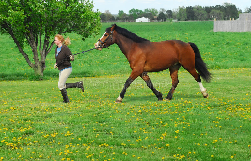 Download Woman and horse stock photo. Image of farm, field, pony - 5132938