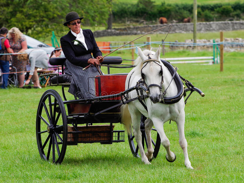 Woman horse driving. A woman horse driving at the North Lonsdale Agricultural show royalty free stock photo