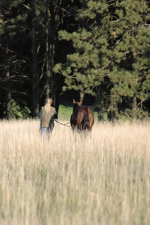 Download Woman And Horse In Field Royalty Free Stock Image - Image: 3889036