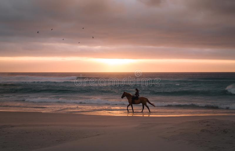 Woman horse riding along the sea shore stock images