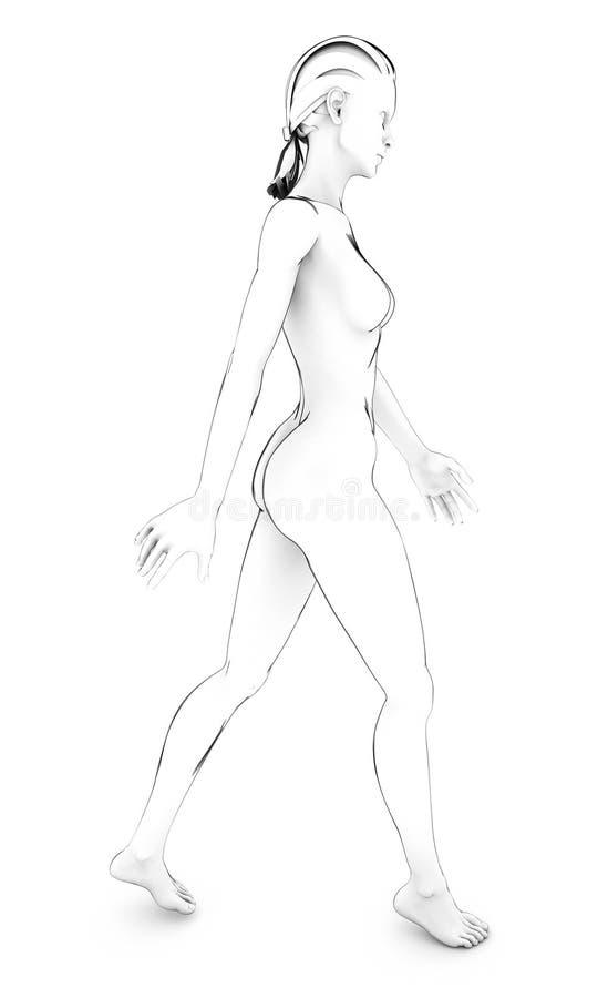 Woman Human Body Anatomy Body White Drawing Sketch Stock ...