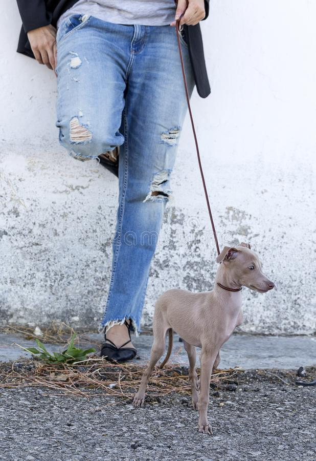 Woman with italian greyhound dog royalty free stock photo