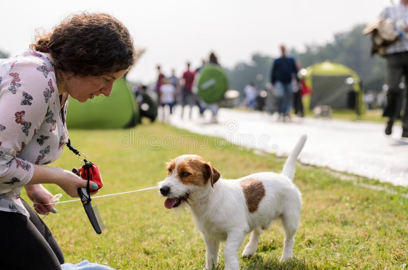Woman with jack russell terrier in an autumn park. stock image