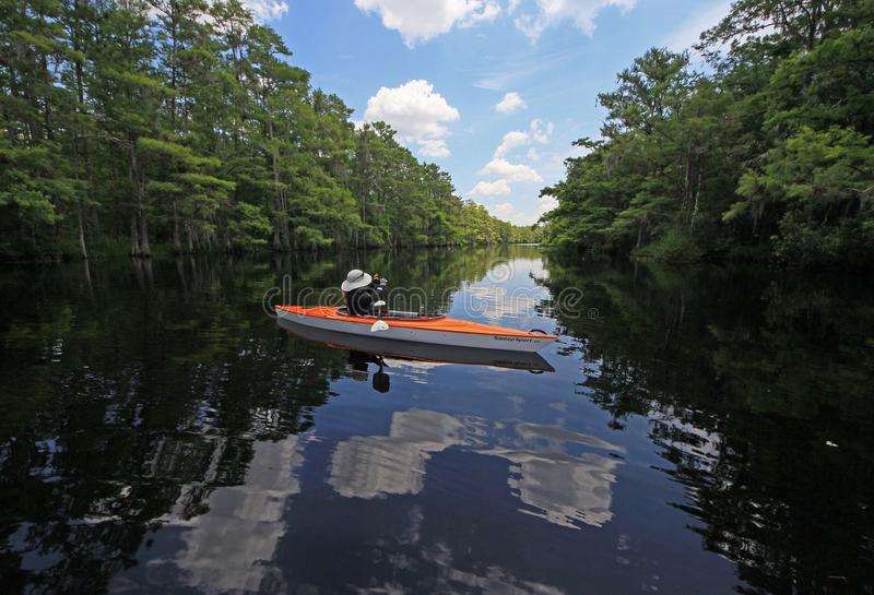 Woman kayaking on Fisheating Creek, Florida. Woman kayaking and photographing the scenery of Fisheating Creek, Florida, the only remaining free-flowing creek royalty free stock photography
