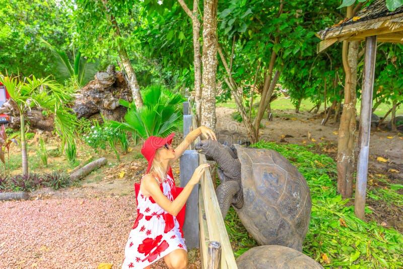 Woman kissing giant tortoise stock photo