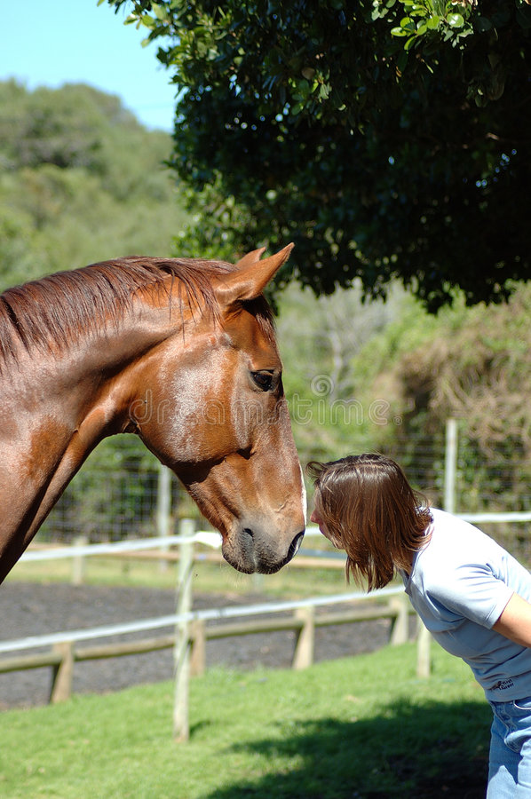 Woman kissing horse stock images