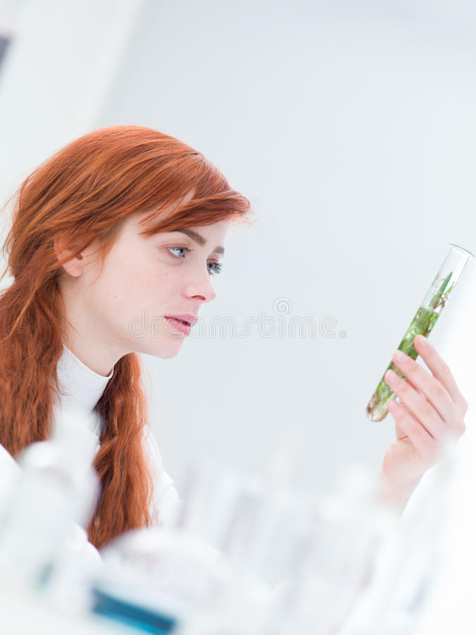 Woman Laboratory Plant Analysis Royalty Free Stock Photography