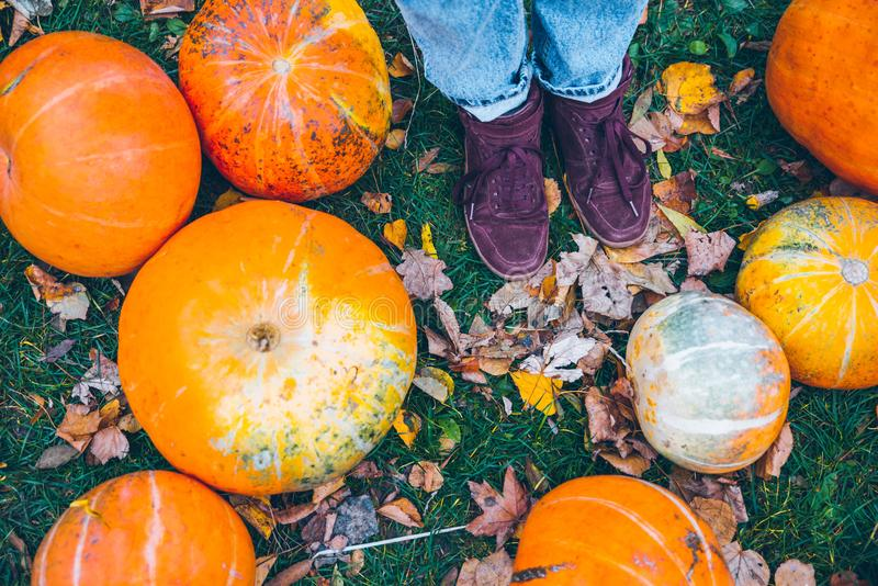 Woman lags near pumpkins. In autumn day royalty free stock image