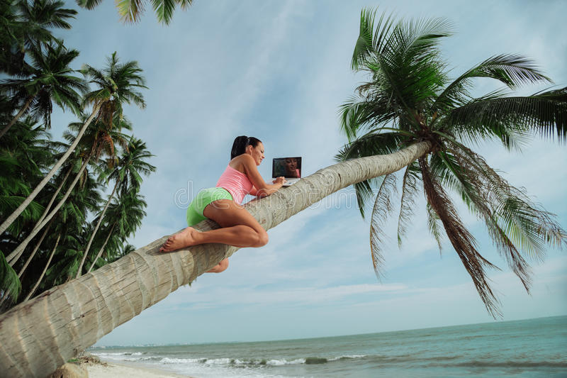 Woman with laptop seated in a tree stock photo