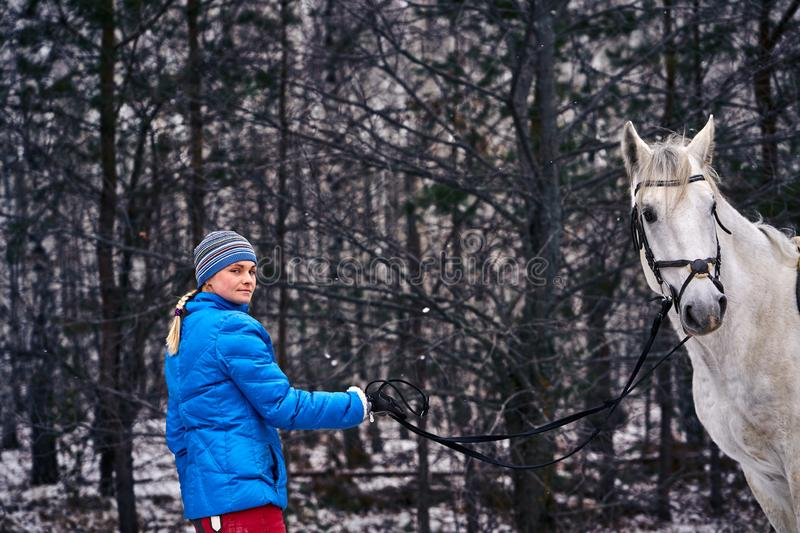 A woman leads a horse on a leash. Young pretty woman in blue jacket and sports hat on a walk with a white horse on a winter cloudy day. A woman leads a horse on stock images