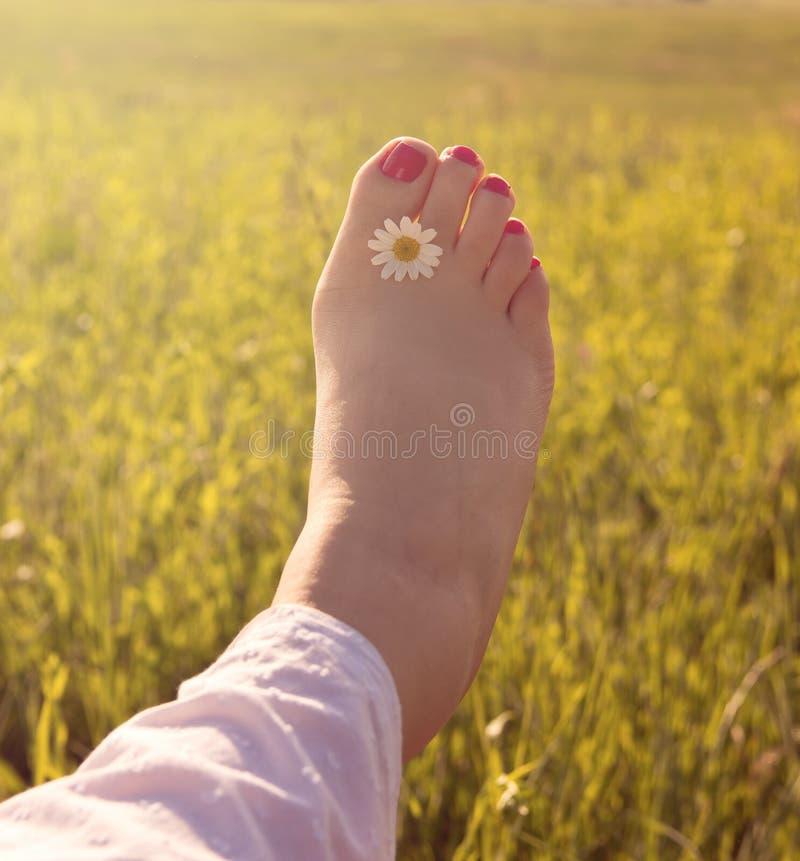 Woman Leg. With Daisy Flower