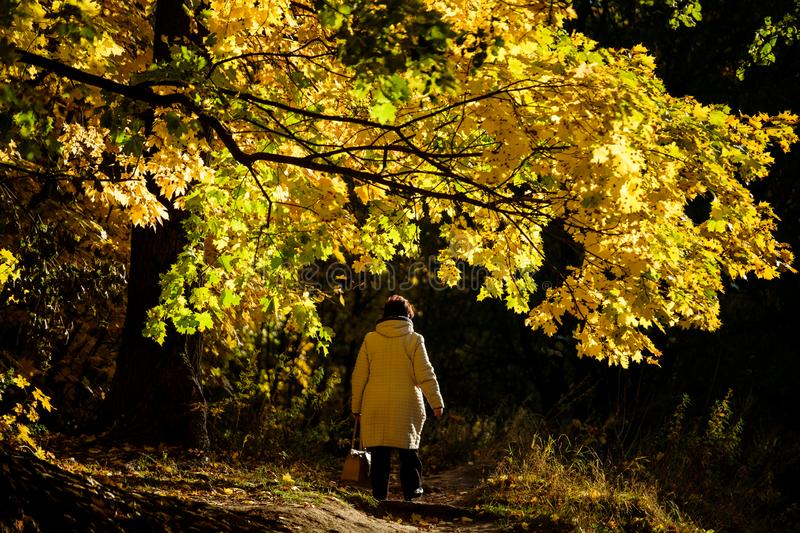 A woman in a light jacket is walking along a yellow maple avenue royalty free stock photos