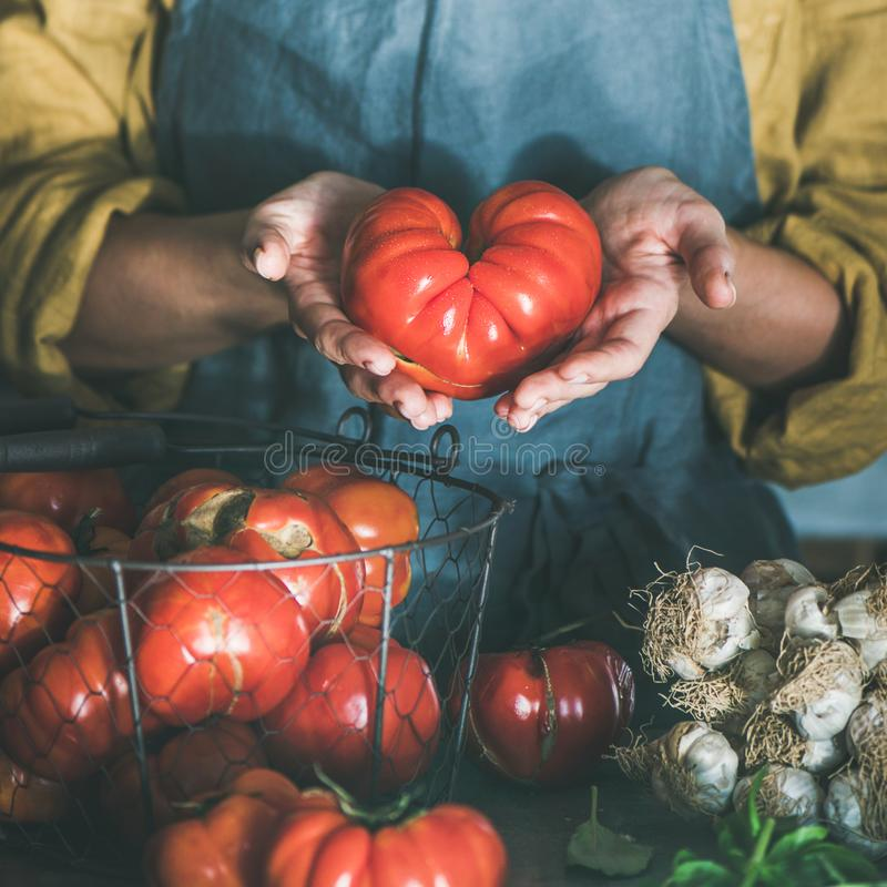 Woman in linen apron holding ripe heirloom tomato, square crop stock image