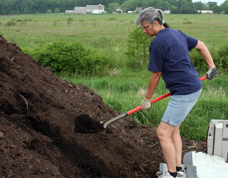 Download Woman loading compost stock photo. Image of shovel, worker - 24867262