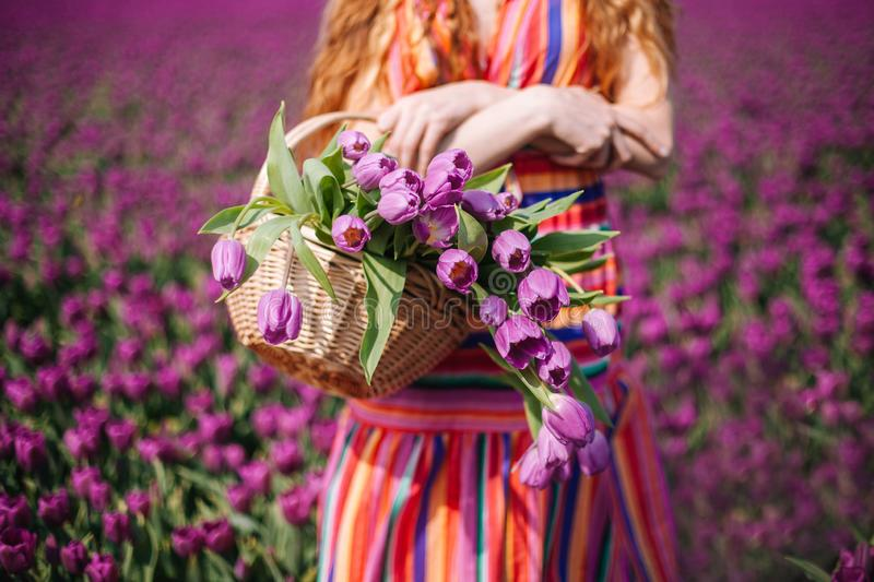 Woman with long red hair wearing a striped dress holding a basket with bouquet of purple tulips flowers royalty free stock photo