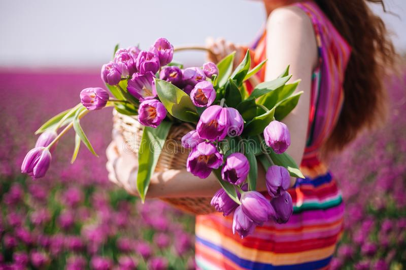 Woman with long red hair wearing a striped dress holding a basket with bouquet of purple tulips flowers stock images