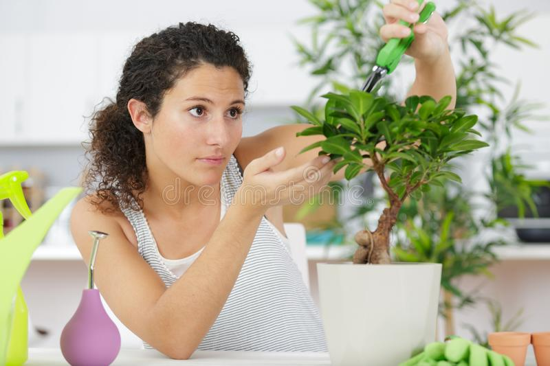 Woman looking after plant stock photos