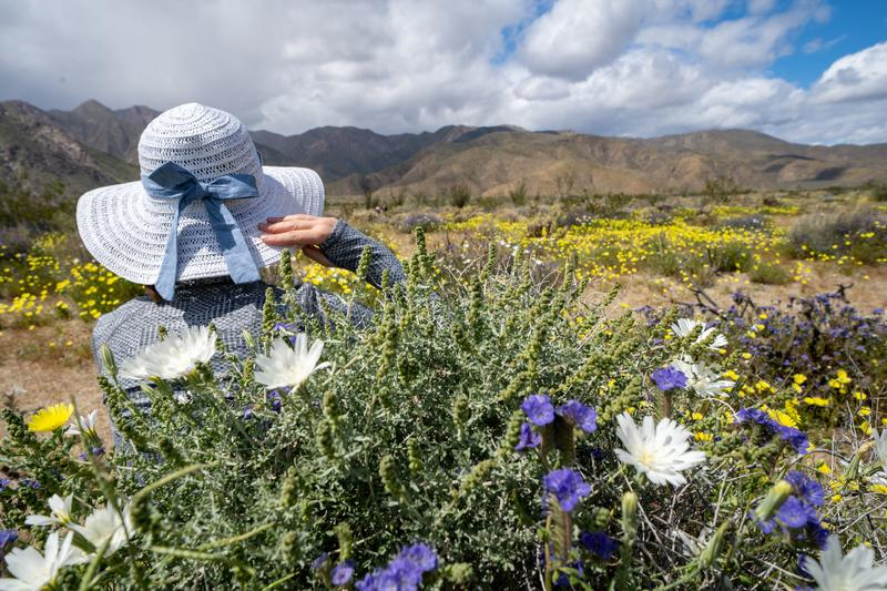 Woman looks off to the mountains, wearing a white straw hat bonnet with a bow, surrounded by wildflowers.  royalty free stock image