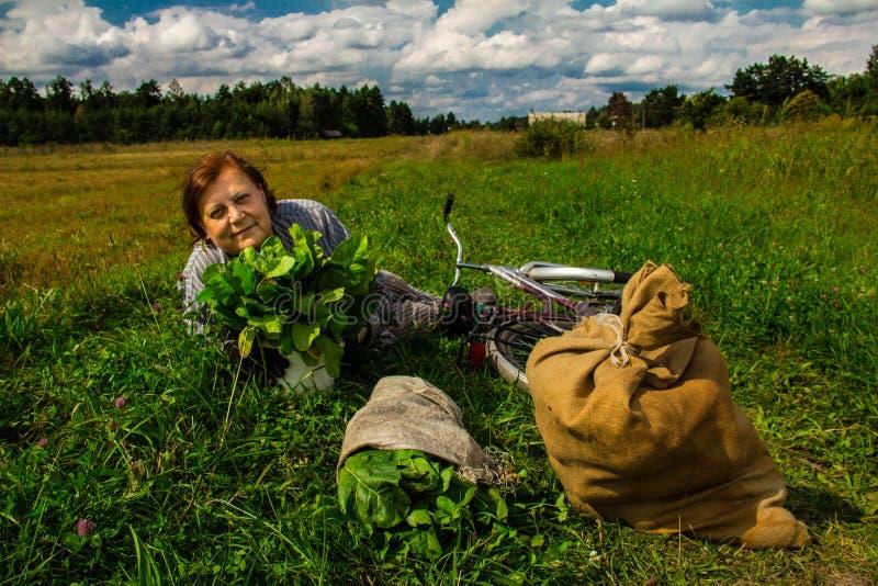 A woman is lying in a field near a pumpkin crop. Autumn landscape. Harvesting. Background stock photo