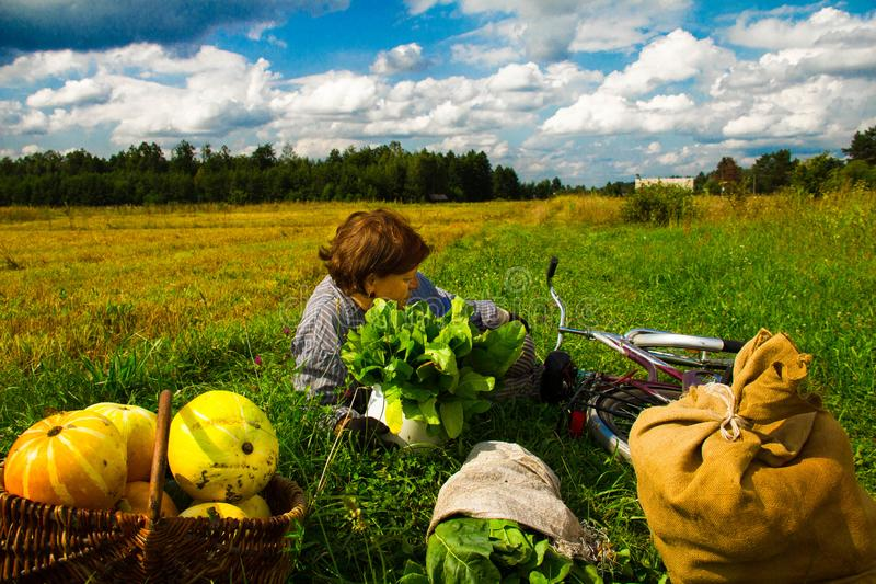 A woman is lying in a field near a pumpkin crop. Autumn landscape. Harvesting. Background royalty free stock images