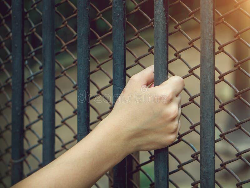 Woman& x27; mão de s que guarda uma custódia de aço fotografia de stock