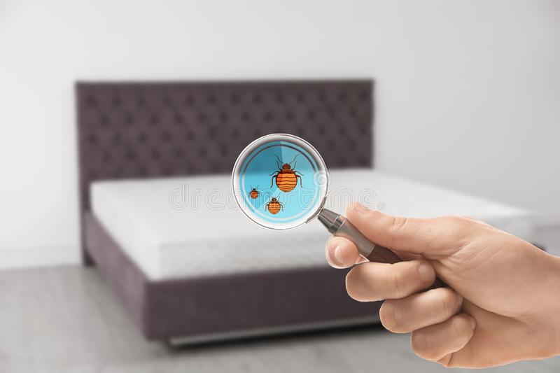 Woman with magnifying glass detecting bed bugs on mattress. Closeup stock images