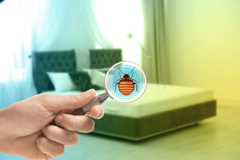 Woman with magnifying glass detecting bed bugs on mattress. Closeup stock photo