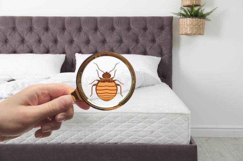 Woman with magnifying glass detecting bed bugs on mattress. Closeup stock image