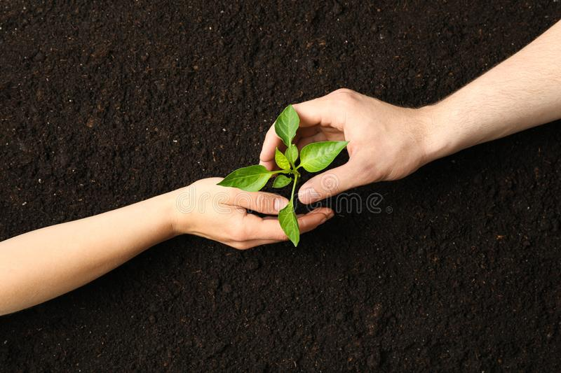 Woman and man hands hugs a green sprout in black soil, top view and space for text. Environmental protection royalty free stock photos