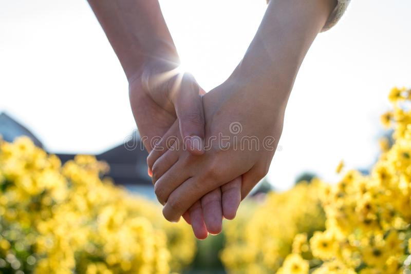 Woman and man holding hand. In Chinese Chrysanthemum flower field royalty free stock photos