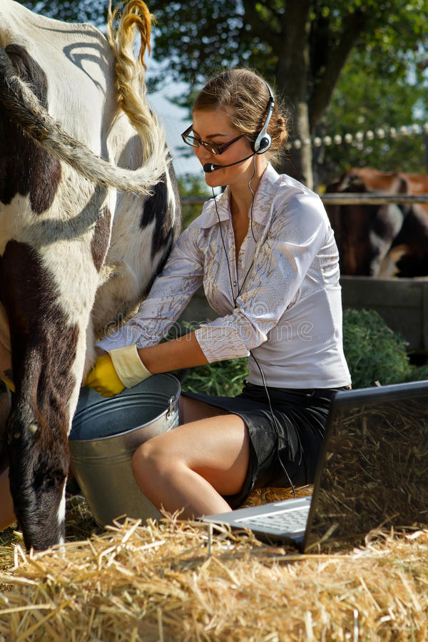 Woman milking cow stock image. Image of hayrick, bovine