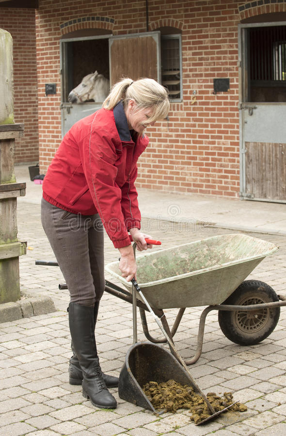 Woman mucking out in a stable yard. September 2016 - Stable girl collecting horse manure in a stable yard stock images