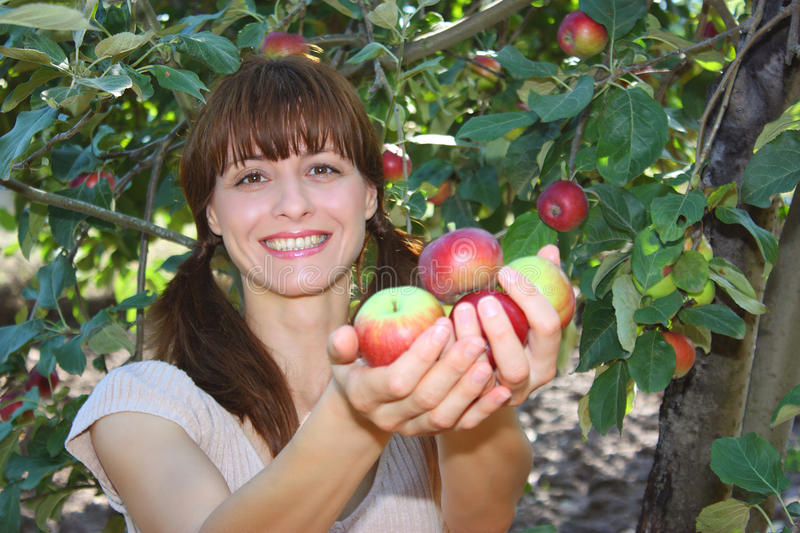 A woman offering apples. A smiling woman offering fresh apples in a garden royalty free stock photos