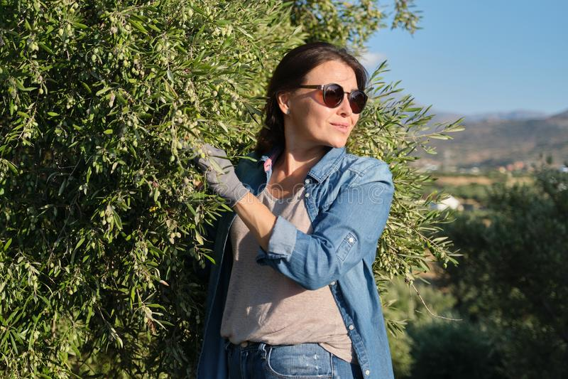 Woman in an olive grove, unripe olive crop. Woman in an olive grove, autumn sunny day in mountain Mediterranean landscape, unripe olive crop stock image