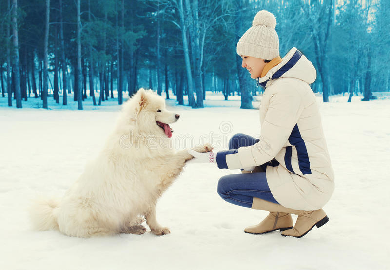 Woman owner teaches white Samoyed dog in winter royalty free stock photo