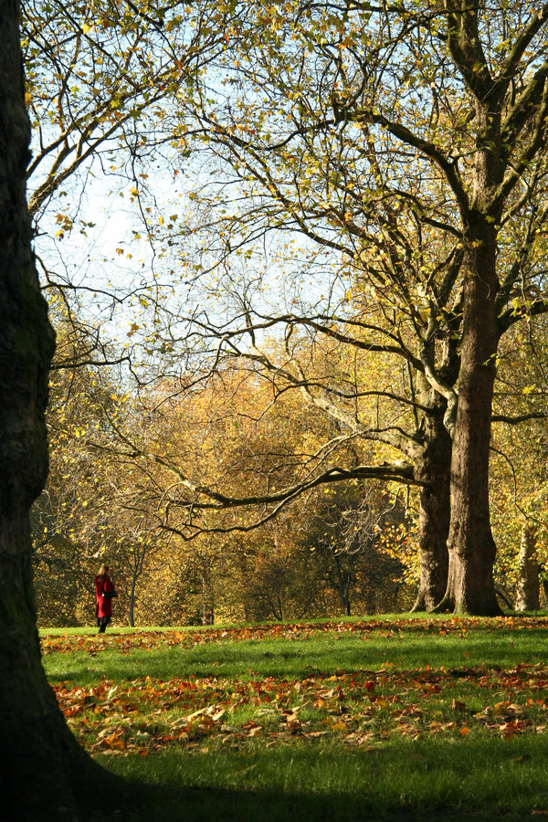 Public Park with Falling Autumn Leaves stock photos