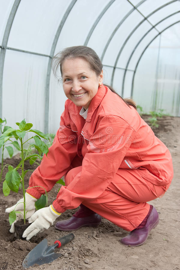 Woman with pepper seedlings royalty free stock photos