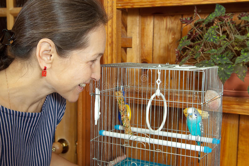 Woman with a pet in a cage. Mature woman takes care of the pet budgie royalty free stock photo