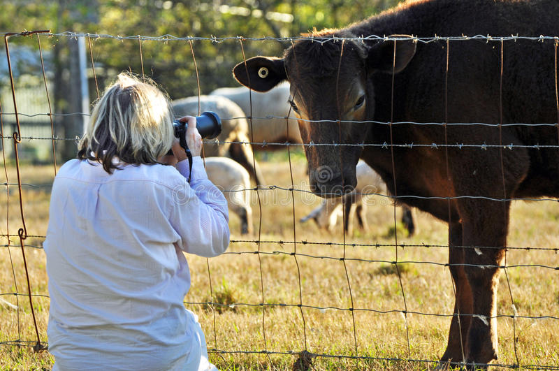 Woman pet photographer photographing variety farm animals. One of the utter enjoyments of the job, a woman pet and people photographer is carefully placing her stock image