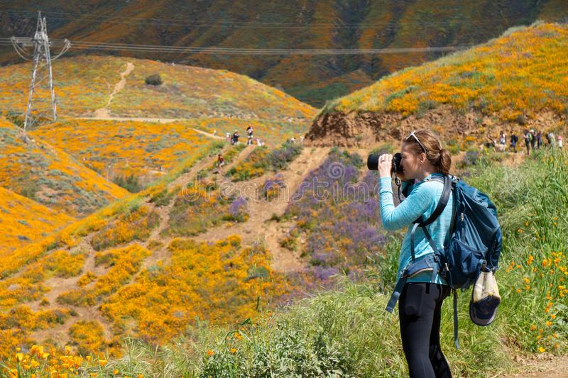 Woman photographer takes photos at Walker Canyon in Lake Elsinore California during the poppy superbloom 2019. Woman photographer takes photos at Walker Canyon stock photography