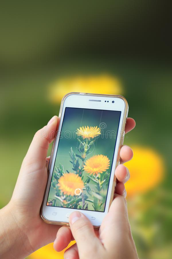Woman photographing a flower with her cell phone. royalty free stock photo
