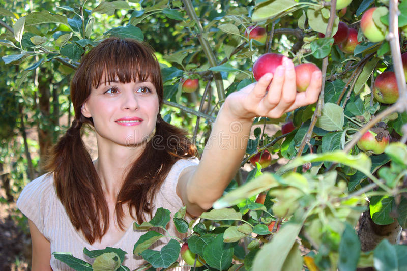 A woman picking apple royalty free stock photos