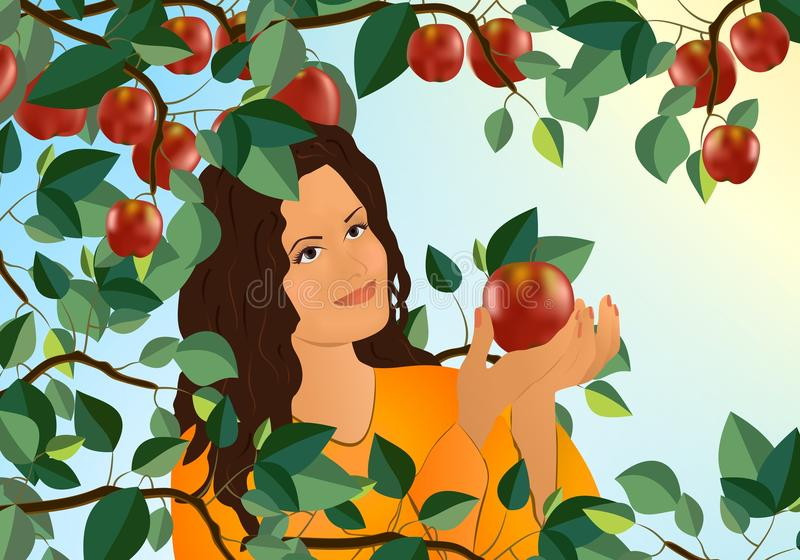 Woman picking an apple, cdr vector stock photo