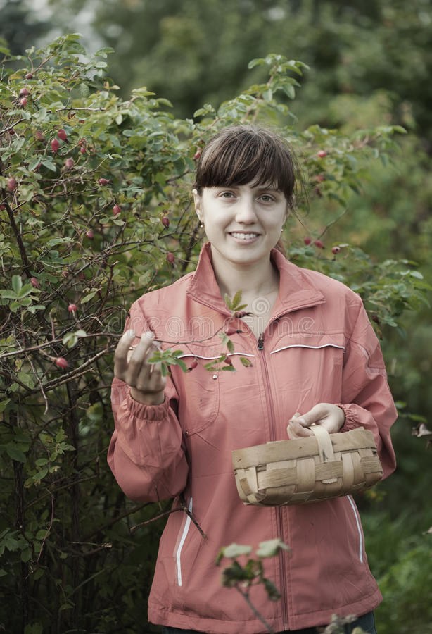 Woman picking briar stock photography