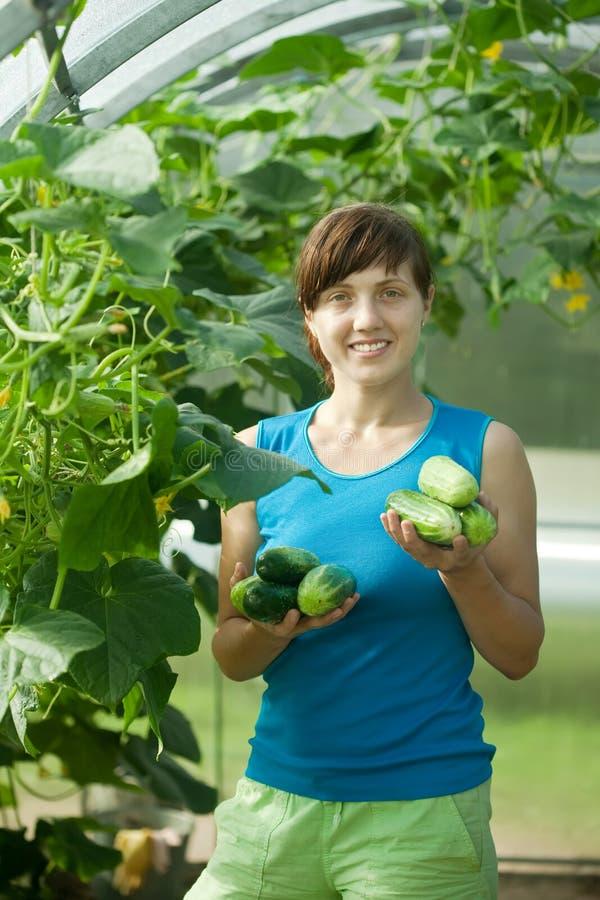 Download Woman picking cucumber stock image. Image of food, cucumber - 23409429